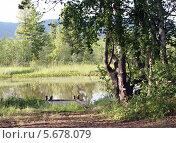 Лесное озеро. Стоковое фото, фотограф Ольга Язовских / Фотобанк Лори
