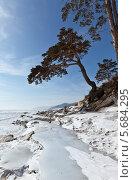 Зимний берег Байкала с красивыми соснами. Стоковое фото, фотограф Виктория Катьянова / Фотобанк Лори