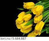 Купить «Жёлтые тюльпаны на чёрном фоне», фото № 5684887, снято 8 марта 2014 г. (c) Ласточкин Евгений / Фотобанк Лори