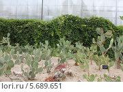 Балчик. Ботанический сад в Болагрии. Стоковое фото, фотограф Анна Алексеева / Фотобанк Лори