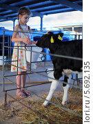 Купить «Девочка кормит теленка», фото № 5692135, снято 3 июня 2013 г. (c) Losevsky Pavel / Фотобанк Лори