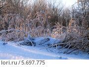 У зимнего леса. Стоковое фото, фотограф Елена Сидорова / Фотобанк Лори