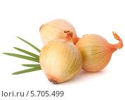 Купить «Три репчатые луковицы и зеленый перьевой лук», фото № 5705499, снято 6 ноября 2012 г. (c) Natalja Stotika / Фотобанк Лори