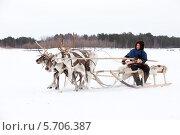 Купить «Соревнование оленьих упряжек на празднике охотников и оленеводов», фото № 5706387, снято 14 марта 2014 г. (c) Владимир Мельников / Фотобанк Лори