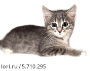 Котенок удивлен с большими глазами. Стоковое фото, фотограф Виктор Шушурин / Фотобанк Лори