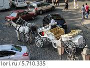 Белая карета с кучером на современной улице с брусчаткой (2012 год). Редакционное фото, фотограф Дмитрий Романенко / Фотобанк Лори
