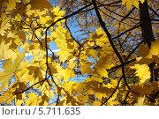 Золотая осень. Стоковое фото, фотограф Нина Лопатина / Фотобанк Лори