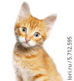 Купить «Рыжий котенок на белом фоне», фото № 5712595, снято 21 ноября 2019 г. (c) Владимир Красюк / Фотобанк Лори