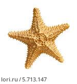 Купить «Морская звезда», фото № 5713147, снято 9 февраля 2014 г. (c) Юрий Плющев / Фотобанк Лори