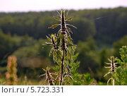 Полевое растение. Стоковое фото, фотограф Ольга Печёнова / Фотобанк Лори