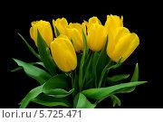 Купить «Букет желтых тюльпанов на черном фоне», фото № 5725471, снято 8 марта 2014 г. (c) Ласточкин Евгений / Фотобанк Лори
