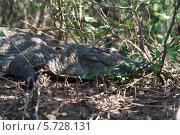 Купить «Гоа. Крокодил в джунглях», эксклюзивное фото № 5728131, снято 18 июля 2019 г. (c) ФЕДЛОГ / Фотобанк Лори