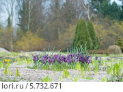 Купить «Ранняя весна. Цветущий Иридодиктиум в ботаническом саду», эксклюзивное фото № 5732671, снято 22 марта 2014 г. (c) Svet / Фотобанк Лори