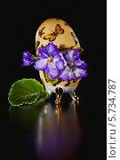 Купить «Цветы узамбарской фиалки (Сенполия )», фото № 5734787, снято 22 марта 2014 г. (c) Ольга Денисова / Фотобанк Лори