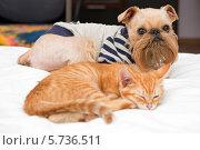 Купить «Собака и котенок лежат рядом», фото № 5736511, снято 2 октября 2013 г. (c) Okssi / Фотобанк Лори