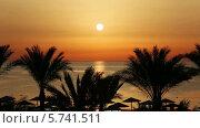Купить «Силуэты пальм на рассвете», видеоролик № 5741511, снято 24 марта 2014 г. (c) Михаил Коханчиков / Фотобанк Лори