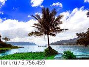 Пальма у озера Тоба. Остров Самосир, Северная Суматра, Индонезия (2014 год). Стоковое фото, фотограф Nikolay Grachev / Фотобанк Лори