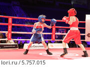 Купить «Балашиха, боксёры», эксклюзивное фото № 5757015, снято 29 марта 2014 г. (c) Дмитрий Неумоин / Фотобанк Лори