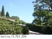 Аллея в Воронцовском парке в Алупке в Крыму (2013 год). Стоковое фото, фотограф Дмитрий Булатов / Фотобанк Лори