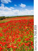 Купить «Большое поле с цветущими красными маками», фото № 5768859, снято 5 июня 2013 г. (c) Сергей Новиков / Фотобанк Лори