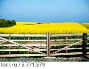 Купить «Поле рапса за забором», фото № 5771579, снято 5 июня 2013 г. (c) Татьяна Кахилл / Фотобанк Лори