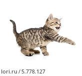 Купить «Маленький полосатый котенок мяукает, подняв лапу на белом фоне», фото № 5778127, снято 6 января 2014 г. (c) Андрей Кузьмин / Фотобанк Лори