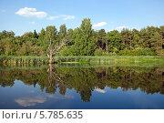 Летний пейзаж на реке Клязьма (2013 год). Стоковое фото, фотограф Виктория Чеканова / Фотобанк Лори