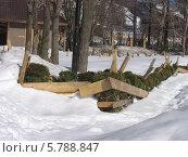 Живая изгородь в ограде из досок для защиты на зиму. Стоковое фото, фотограф Елена Киселева / Фотобанк Лори