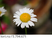 Купить «Ромашки», фото № 5794671, снято 25 июля 2013 г. (c) Хайрятдинов Ринат / Фотобанк Лори