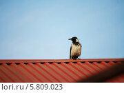 Одинокая ворона сидит на крыше на фоне неба. Стоковое фото, фотограф Мария Северина / Фотобанк Лори