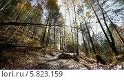 Купить «Осенний лес», видеоролик № 5823159, снято 5 января 2012 г. (c) Виталий Зверев / Фотобанк Лори