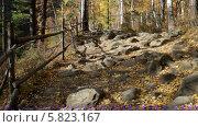 Купить «Изгородь в осеннем лесу», видеоролик № 5823167, снято 5 января 2012 г. (c) Виталий Зверев / Фотобанк Лори