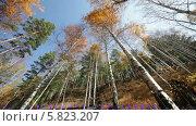Купить «Осенний лес, вид снизу», видеоролик № 5823207, снято 5 января 2012 г. (c) Виталий Зверев / Фотобанк Лори