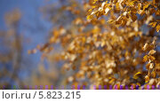Купить «Ветви деревьев с желтыми листьями качаются на ветру», видеоролик № 5823215, снято 5 января 2012 г. (c) Виталий Зверев / Фотобанк Лори
