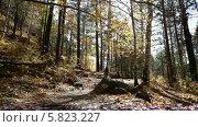 Купить «Осенний лес», видеоролик № 5823227, снято 5 января 2012 г. (c) Виталий Зверев / Фотобанк Лори
