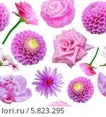 Купить «Бесшовный фон с цветами», фото № 5823295, снято 25 апреля 2014 г. (c) Наталья Спиридонова / Фотобанк Лори