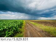Грозовая туча перед дождём над кукурузным полем около города Пензы (2012 год). Стоковое фото, фотограф Андрей Малышкин / Фотобанк Лори