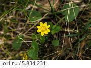 Желтый цветок. Стоковое фото, фотограф Владислав Полушкин / Фотобанк Лори