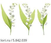 Купить «Три цветка ландыша на белом фоне», иллюстрация № 5842039 (c) Анна Павлова / Фотобанк Лори