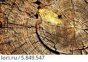 Старое распиленное бревно с трещинами и годовыми кольцами. Сердцевина старого дерева. Стоковое фото, фотограф Вадим Келин / Фотобанк Лори