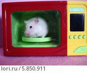 Купить «Белый хомяк сидит внутри игрушечной микроволновки», фото № 5850911, снято 16 апреля 2014 г. (c) Юрий Серебряков / Фотобанк Лори