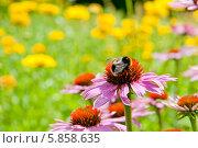 Купить «Летний, солнечный пейзаж с цветком эхинацеи на переднем плане», фото № 5858635, снято 3 августа 2013 г. (c) Татьяна Кахилл / Фотобанк Лори