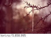 Сосулька на ветке. Стоковое фото, фотограф Сергей Гойшик / Фотобанк Лори