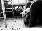 Кошка с собакой. Стоковое фото, фотограф Денис Петров / Фотобанк Лори