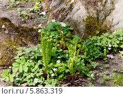 Купить «Весенние растения», фото № 5863319, снято 2 мая 2014 г. (c) Наталья Волкова / Фотобанк Лори