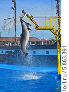 Купить «Представление с участием морских млекопитающих, дельфин афалина, Архипо Осиповский дельфинарий», фото № 5863391, снято 1 мая 2014 г. (c) Игорь Архипов / Фотобанк Лори