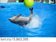 Купить «Представление с участием морских млекопитающих, дельфин афалина, Архипо Осиповский дельфинарий», эксклюзивное фото № 5863395, снято 1 мая 2014 г. (c) Игорь Архипов / Фотобанк Лори