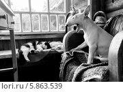 Собака с кошкой. Стоковое фото, фотограф Денис Петров / Фотобанк Лори