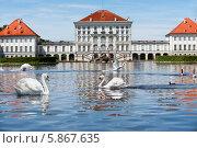 Купить «Лебеди в озере напротив замка Нимфенбург в Мюнхене», фото № 5867635, снято 15 июня 2012 г. (c) Аnna Ivanova / Фотобанк Лори