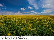 Купить «Цветущее поле, Беларусь», эксклюзивное фото № 5872575, снято 3 мая 2014 г. (c) Литвяк Игорь / Фотобанк Лори
